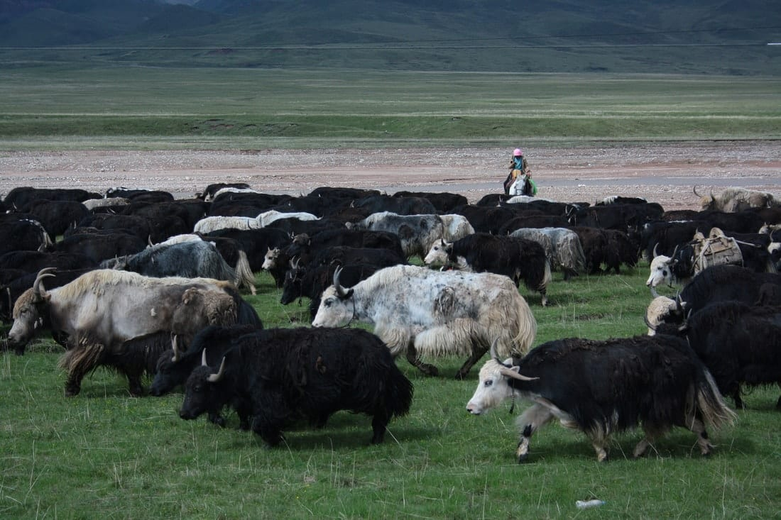 Qinghai, a Pass a Day Keeps the Doctor Away (Chinese Proverb) 7
