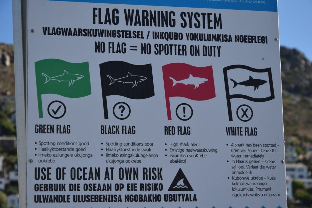 Shark Attack South Africa