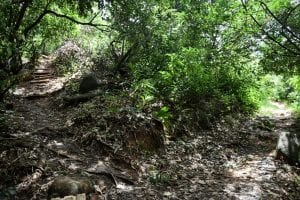 Anse Major Trail and Boat Trip - a stunning secret beach in Mahe 9